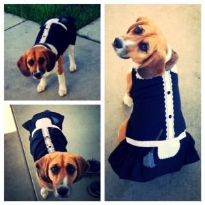 My Dog, Halloween Costume