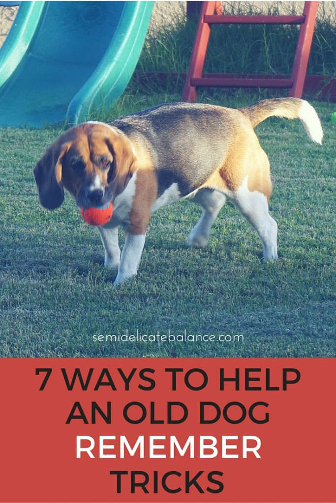 7 WAYS TO HELP an old dog remember new tricks (1)