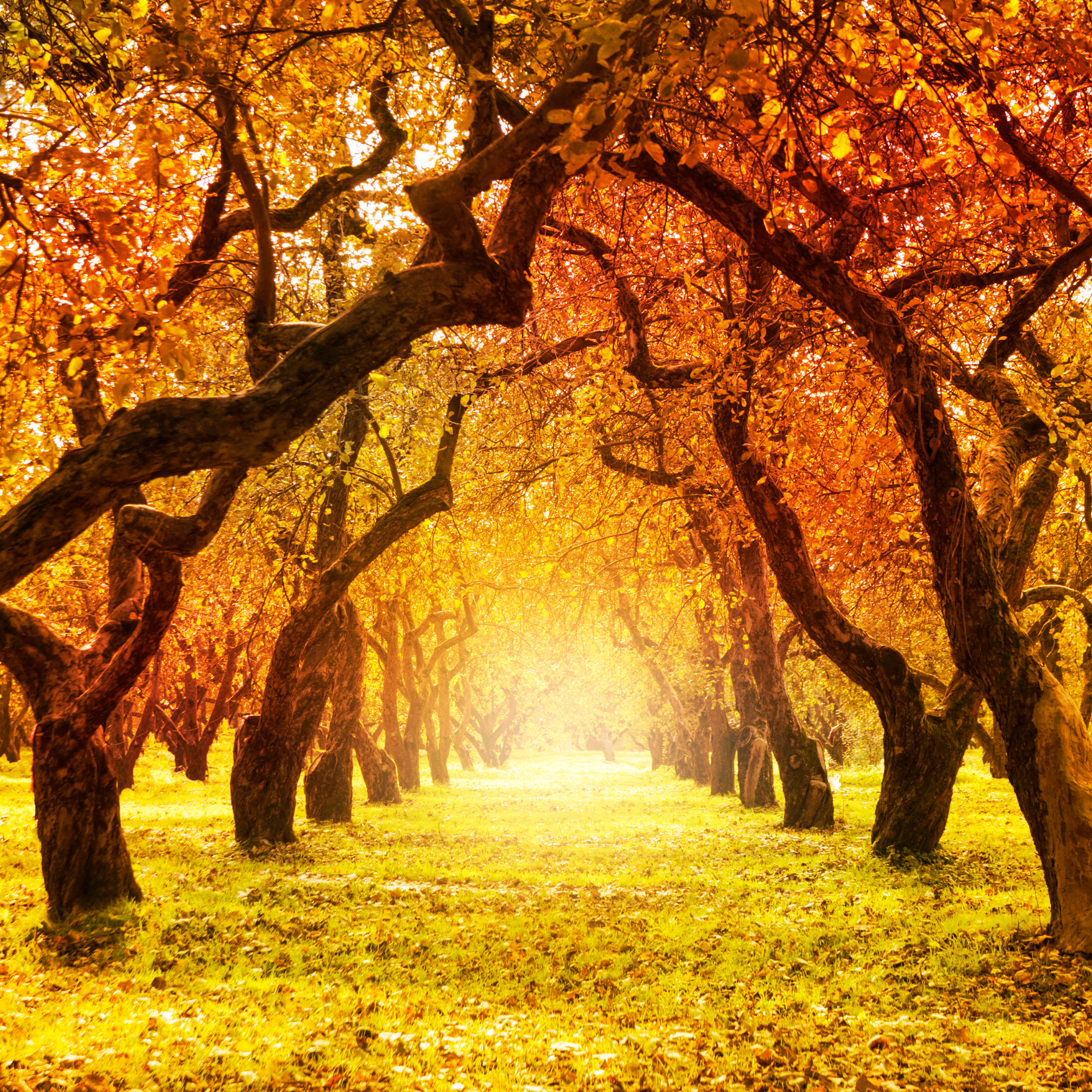 best autumn quotes messages and sayings for the fall season