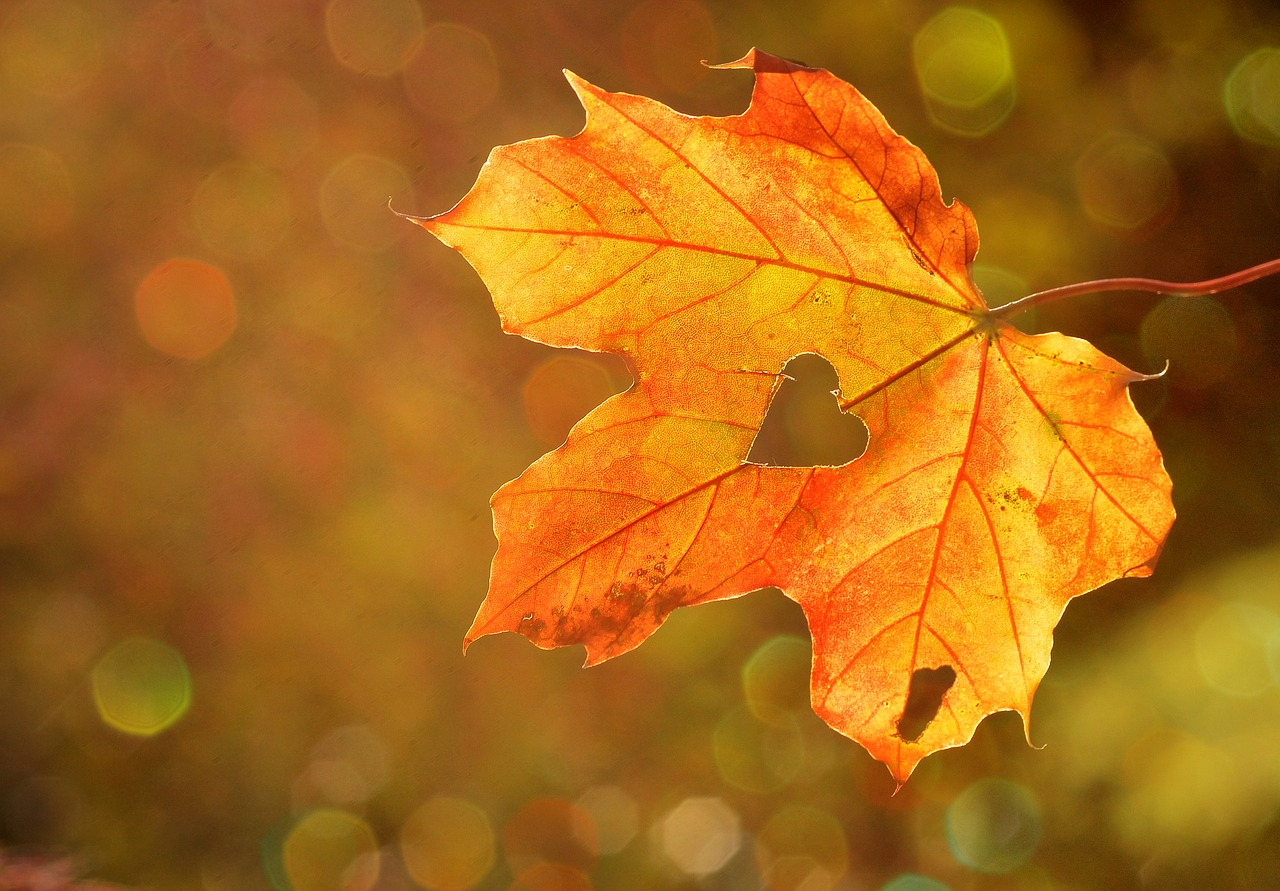 To Autumn: Messages And Sayings For The Fall