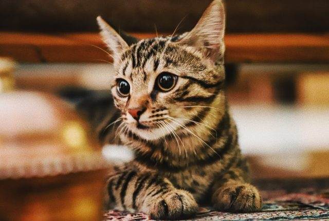 Purr-Fect Quotes About Cats For Any Cat Lover